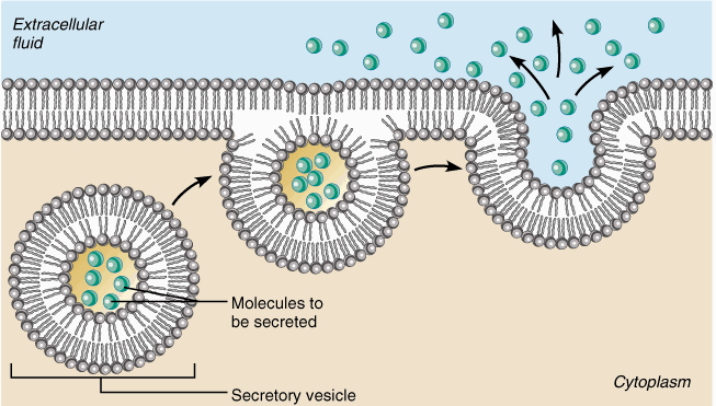 The Cell Membrane Passive And Active Transport The Biology Primer