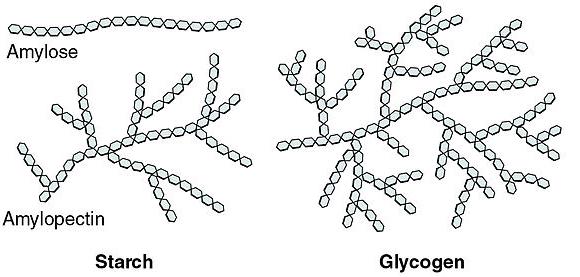 Storage Polysaccharides