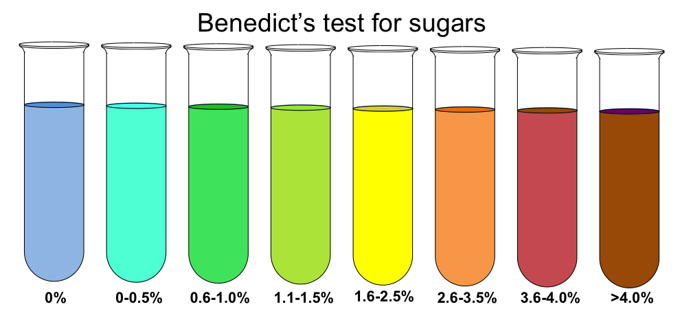 qualitative tests for carbohydrates benedict s test Qualitative tests for carbohydrates: molisch test, benedict's test, barfoed's test, lasker & enkelwitz's test, bial's test, muric acid test, iodine test.