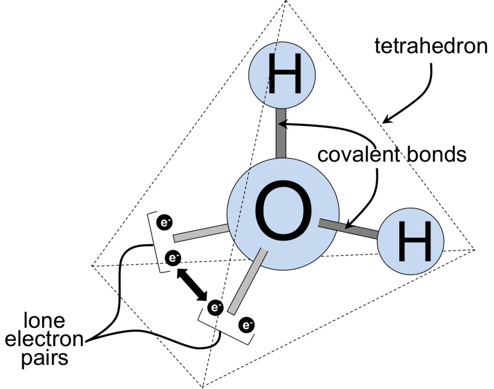 Figure 10. Three dimensional structure of a water molecule. Water is a polar molecule, due to an uneven distribution of electron density. The oxygen in water has a partial negative charge (δ-) due the unequal sharing between the pairs of electrons of oxygen and hydrogen, with oxygen holding the shared electrons more than the hydrogen. In contrast, hydrogen has a partial positive charges (δ+). These partial charges within a water molecule are responsible for hydrogen bonding between water molecules and other molecules, as well.