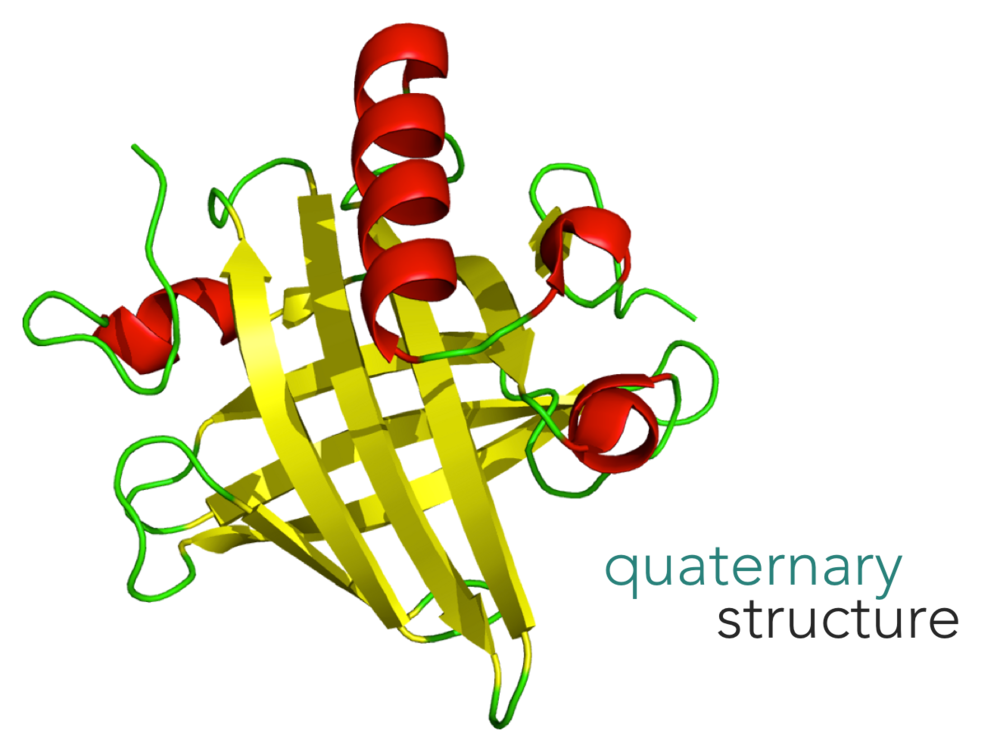 Figure 18.   Quaternary structure of a protein.