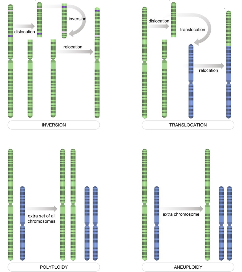 Figure 7.   Chromosome-level mutations.