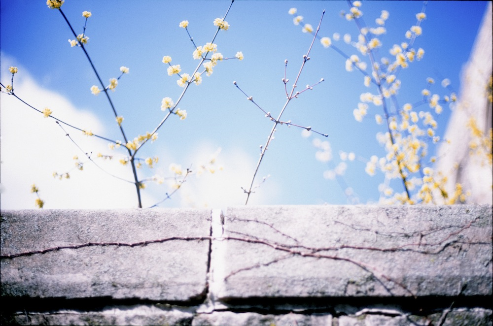 tree-wall.jpg