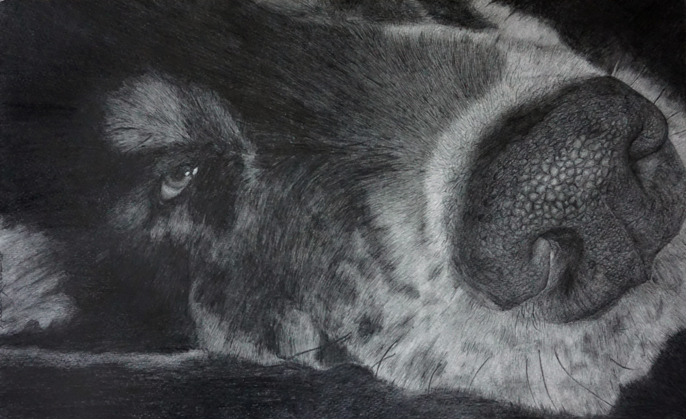 Dog | Pencil | 2009