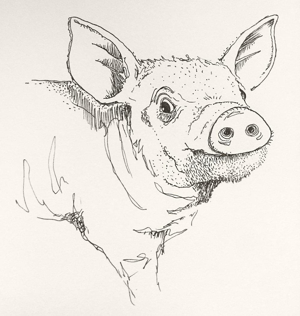 Piglet | Ink | Dec. 2016