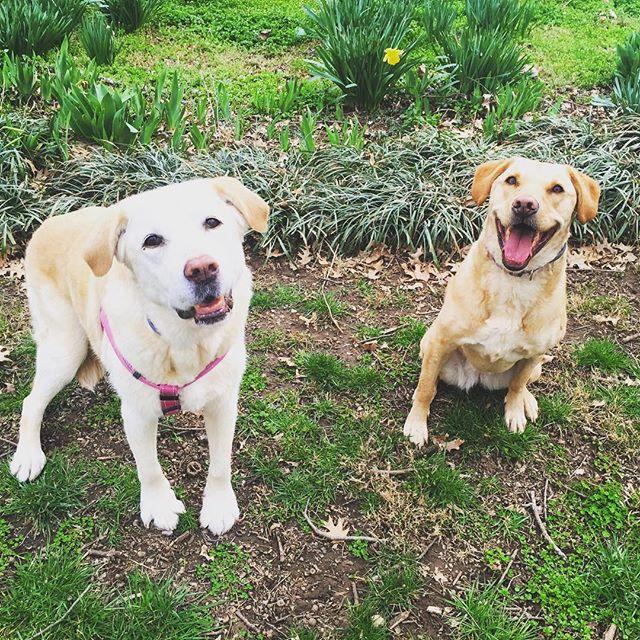 We are so happy it's spring!! 🙌🏽🌺🐶🐶 @adriennefr1 @patrickrfr #dogswhosmile #Nashville