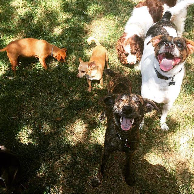 So many happy dogs 🐺🐕🐩🐶🐓🐴 #chaos #nashville @shandrymichelle @zekej23