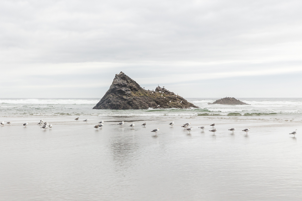 KellySwedaPhotography.Oregon_Coast-7739.jpg