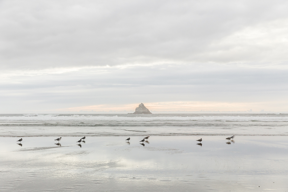 KellySwedaPhotography.Oregon_Coast-7738.jpg