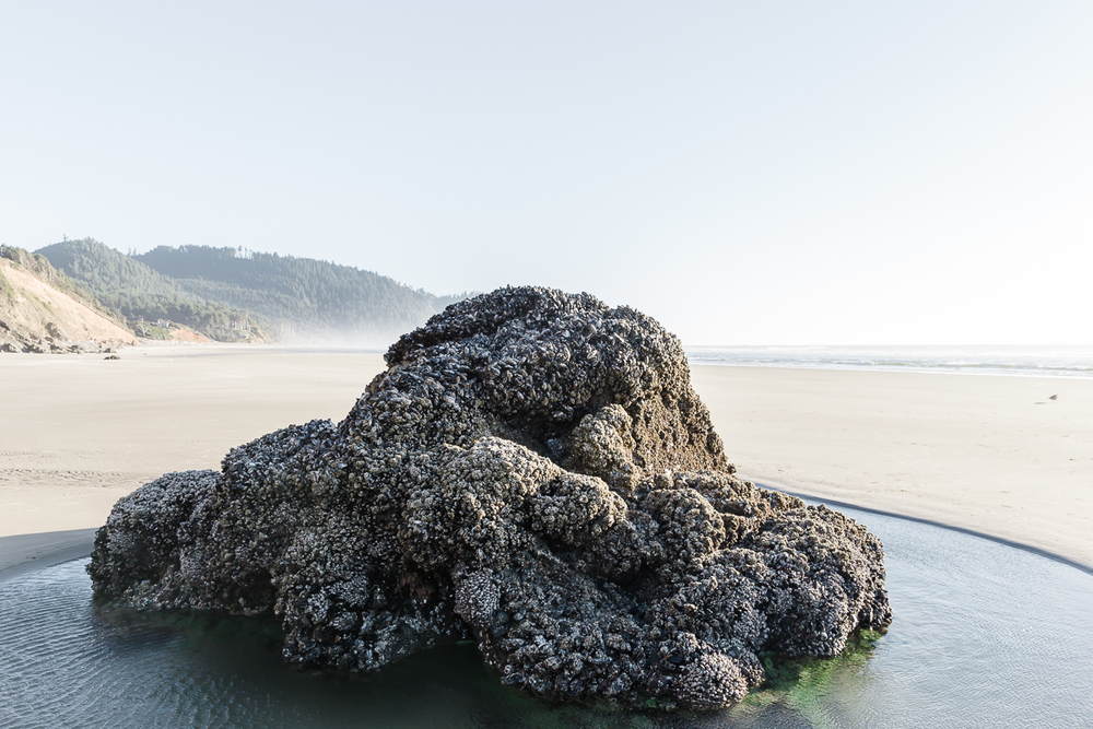 KellySwedaPhotography.Oregon_Coast-7788.jpg