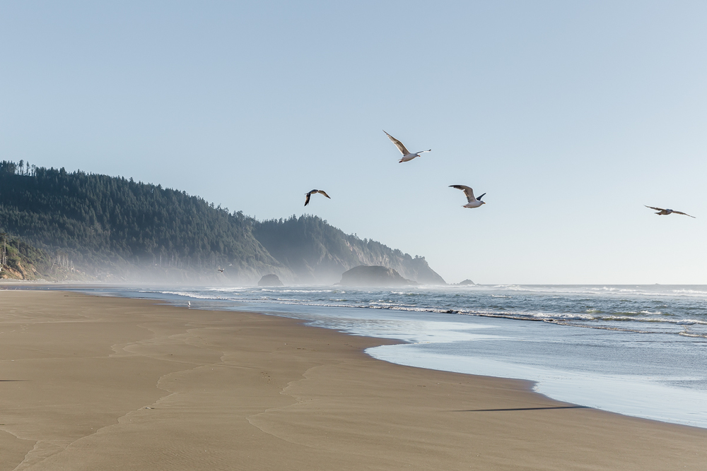 KellySwedaPhotography.Oregon_Coast-7795.jpg