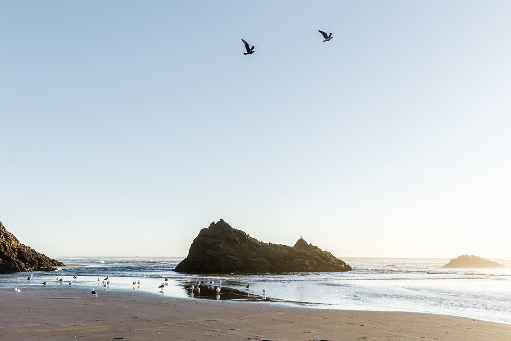 KellySwedaPhotography.Oregon_Coast-7833.jpg