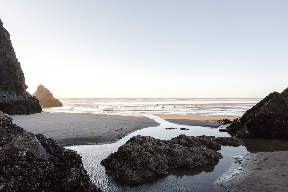 KellySwedaPhotography.Oregon_Coast-7826.jpg