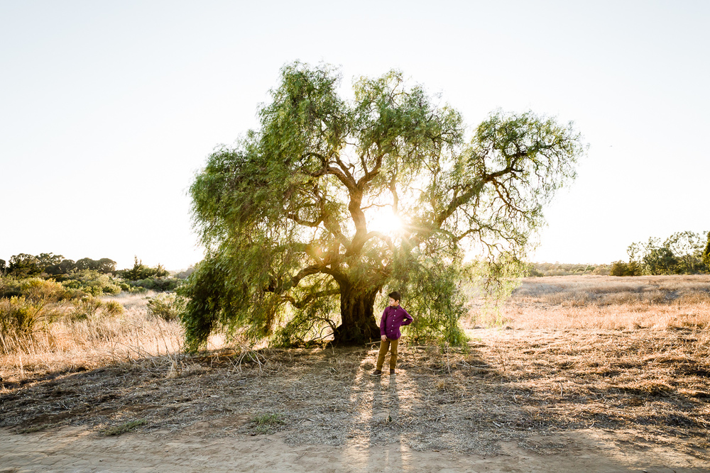 Image from a Family Session with a boy standing in front of a tree