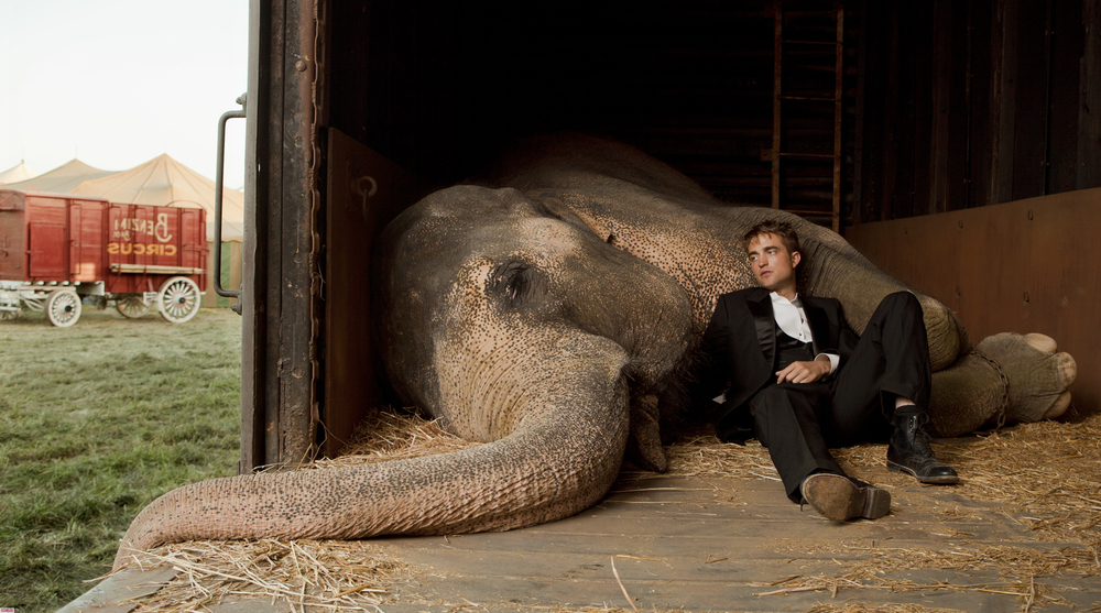 character analysis of water for elephant Water for elephants has 1,199,948  time worn pages resemble the books beloved central character and  what is the water and who is the elephant 39.