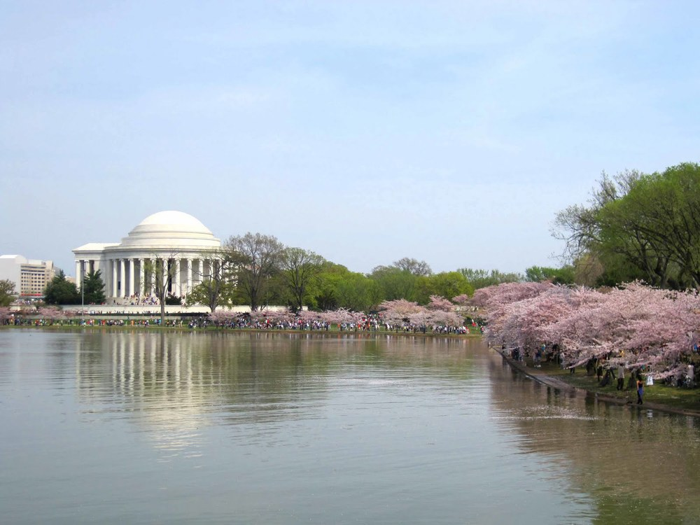 DC's Tidal Basin in the spring - image via  Google .