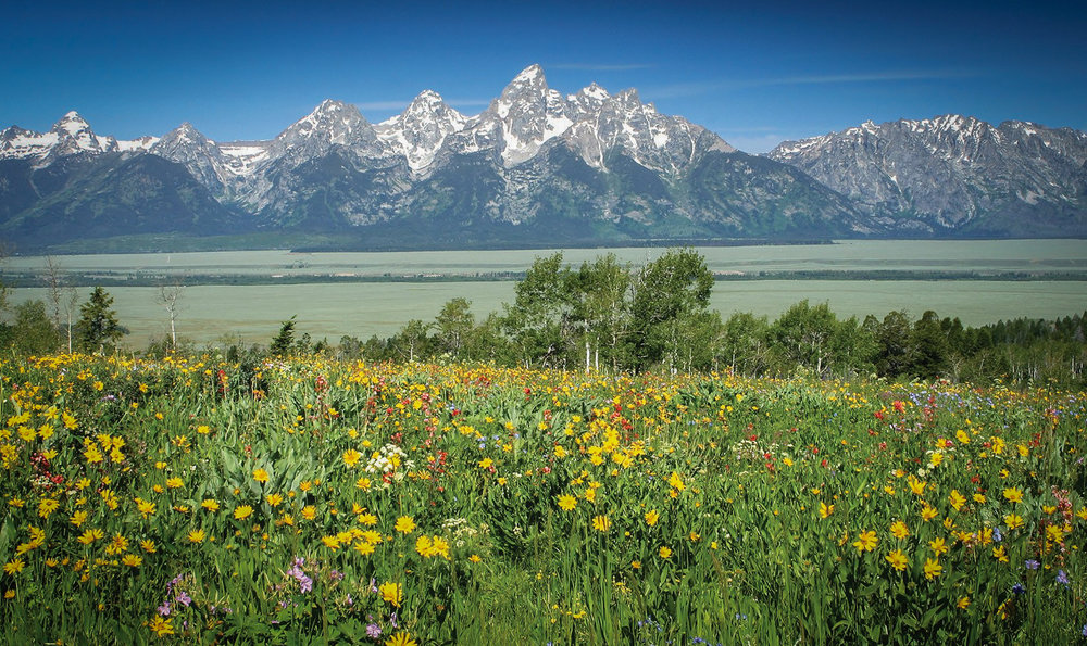 Movies filmed at Grand Teton National Park includes Rocky IV and Shane.