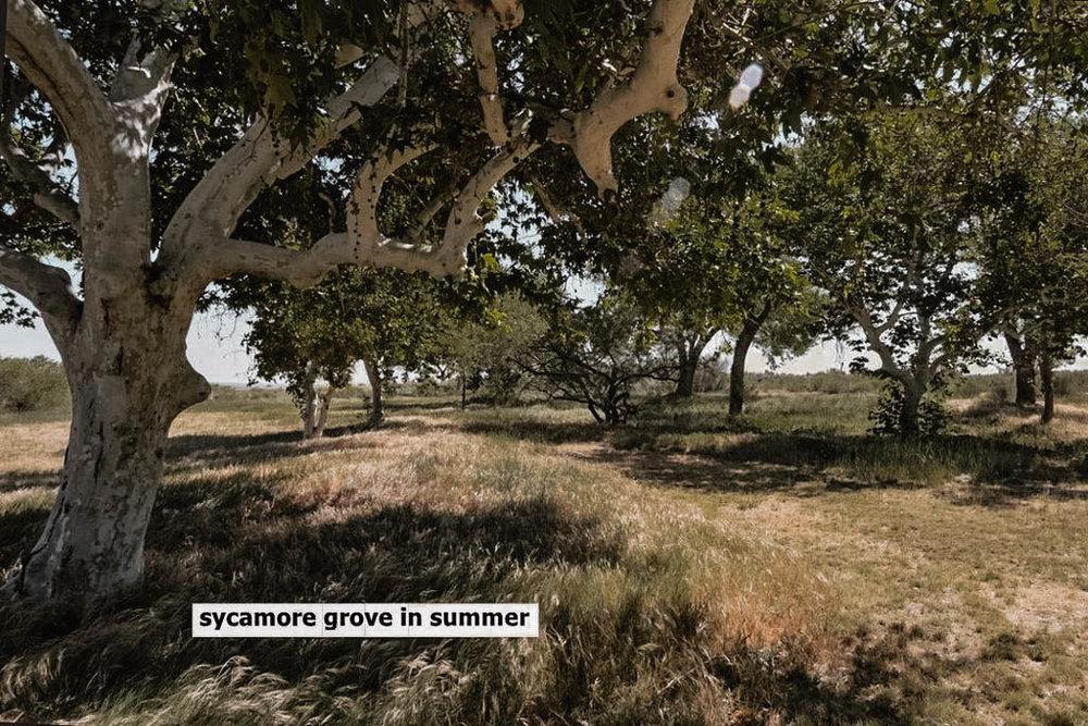 ranch-9.jpg