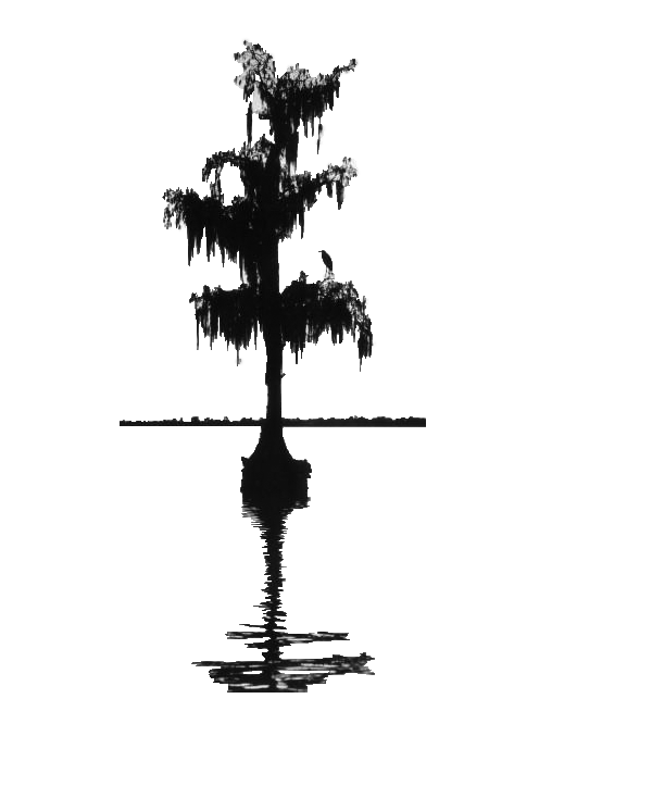 cypress_tree.png