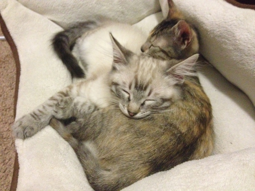 Kitties from Carrie Sauer.jpg
