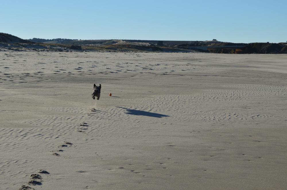 Izzy Defies Gravity Pescadero Beach 01052014.jpg