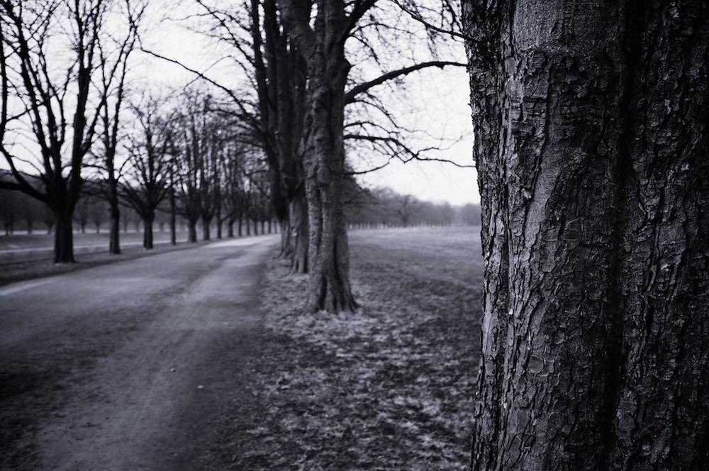 WinterLake 015