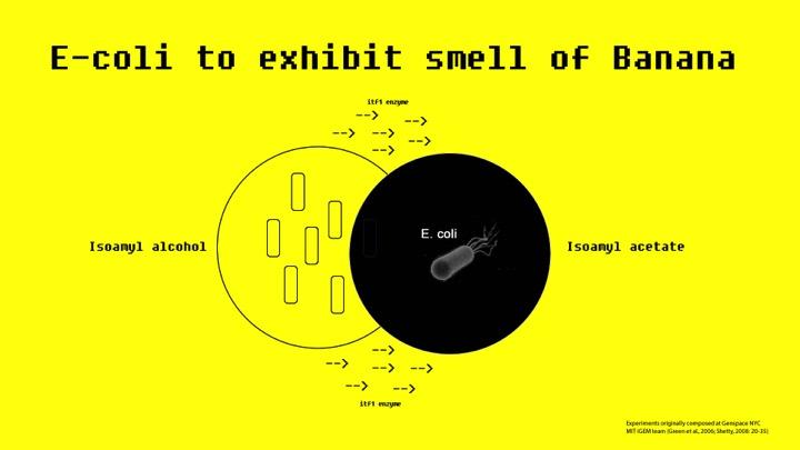 Banana Smell