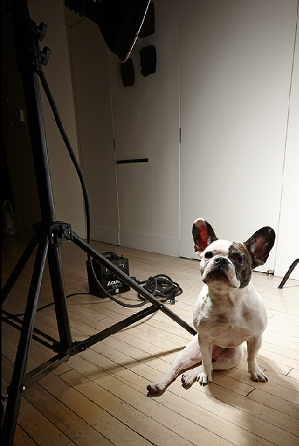 BIBI IS OUR LITTLE FURKID, OUR CONSTANT COMPANION. WE LOVE AND ADORE HER. SHE JOINED US ON THE RECENT PHOTO SHOOT.