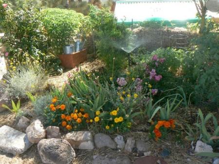 permi garden .jpg