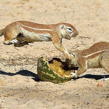 A fit squirl.jpg