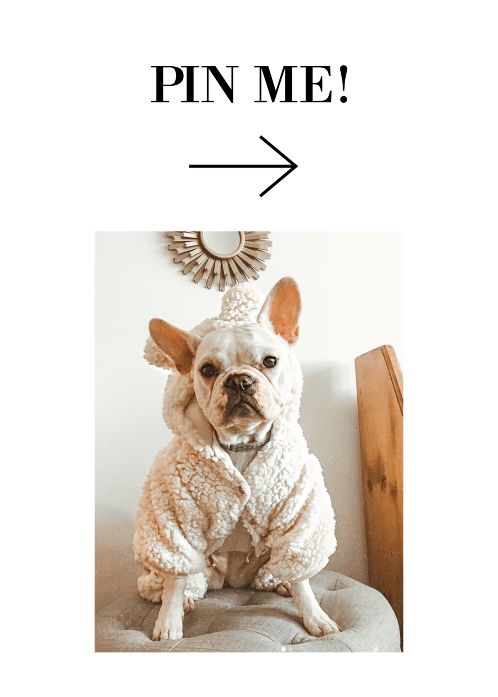 Dog Gift Guide copy.png
