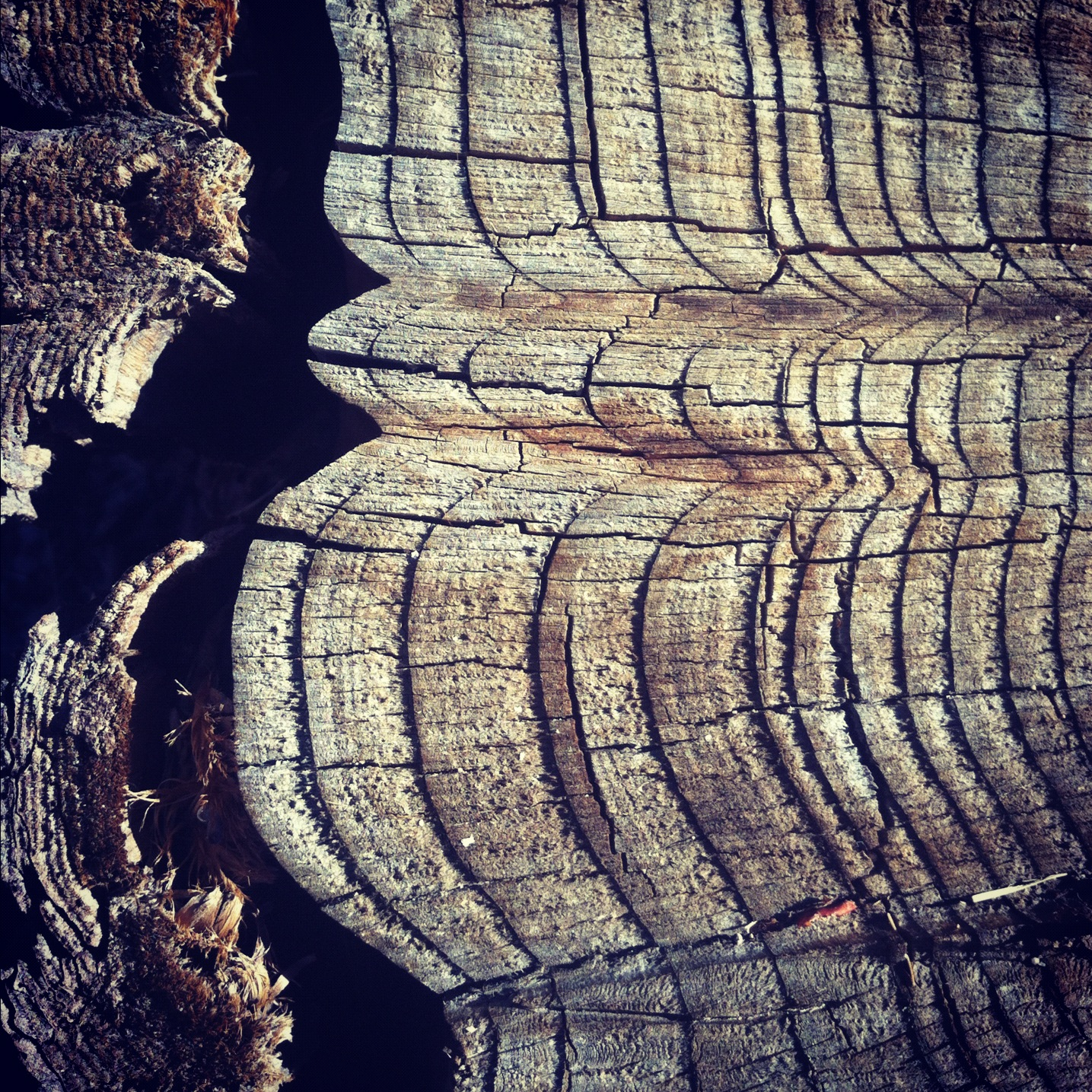 Texture of Tree Stump @texturestudy