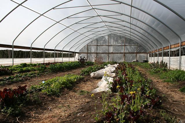 Parideaza Farms Produce