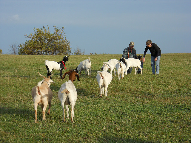 Heehaw Owners with Goats
