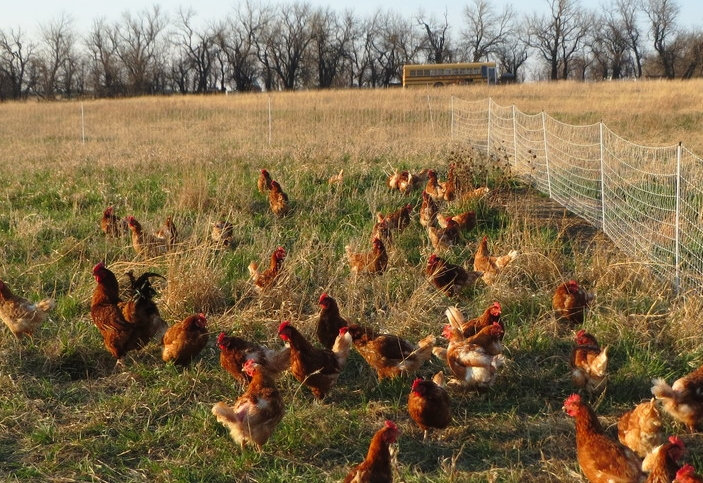 UNRUH PASTURE FRESH POULTRY.jpg
