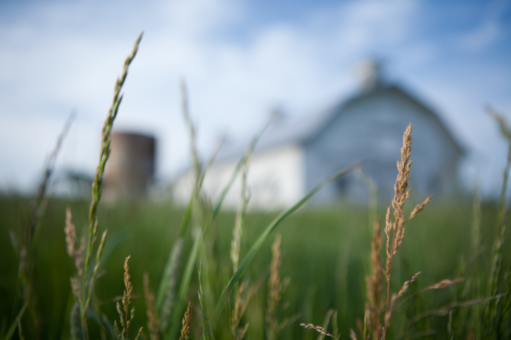 retouch Barn with Grass-1.jpg