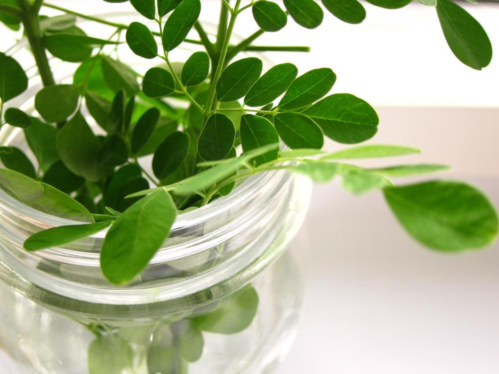 Moringa in a Jar