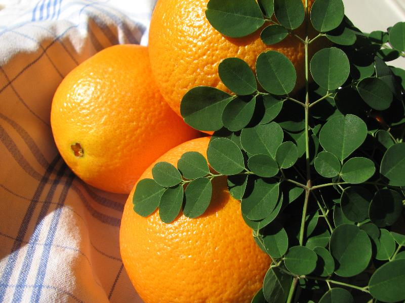 Oranges & Moringa Leaves