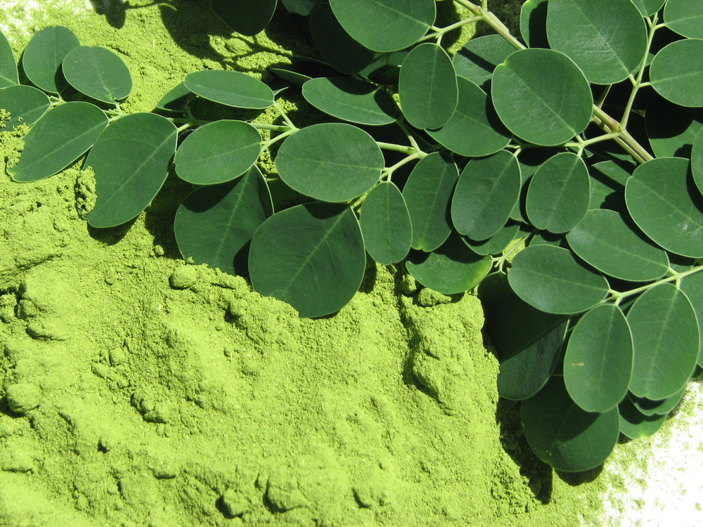 Moringa Malunggay Leaf Powder