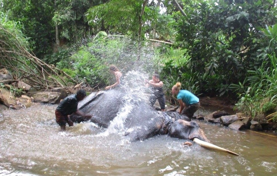 Just your everyday water fight while bathing an elephant. Like you do.