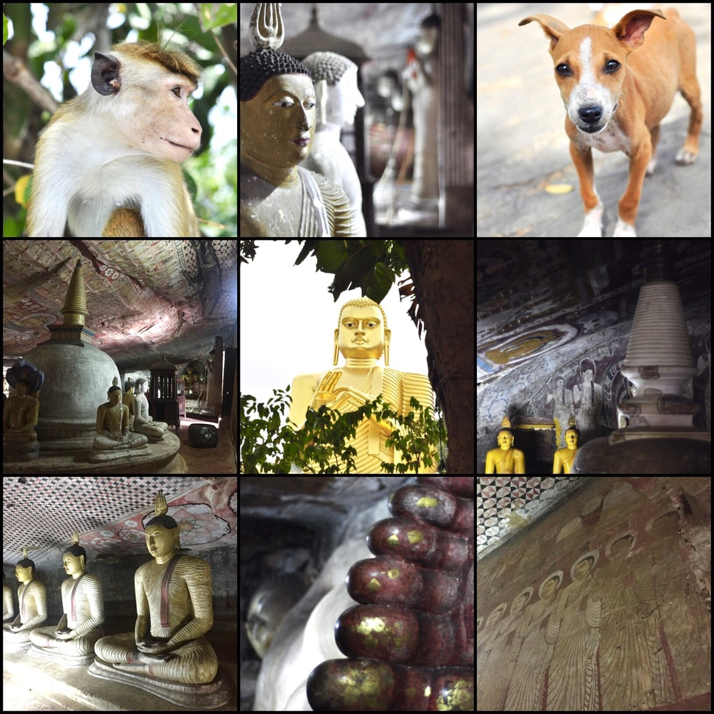 A few shots from Dambulla.