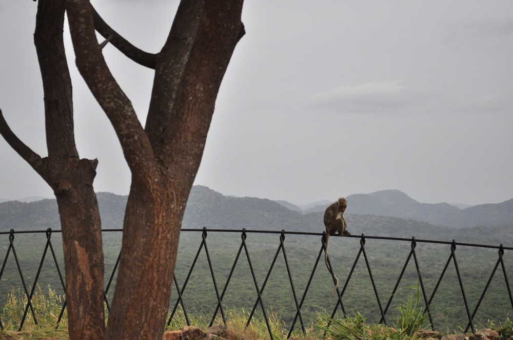 A resident of Sigirya.