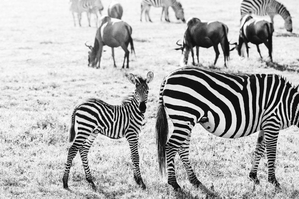 CallieGiovanna_Africa_Tanzania_NgoroNgoroCrater_20150101_08537.jpg