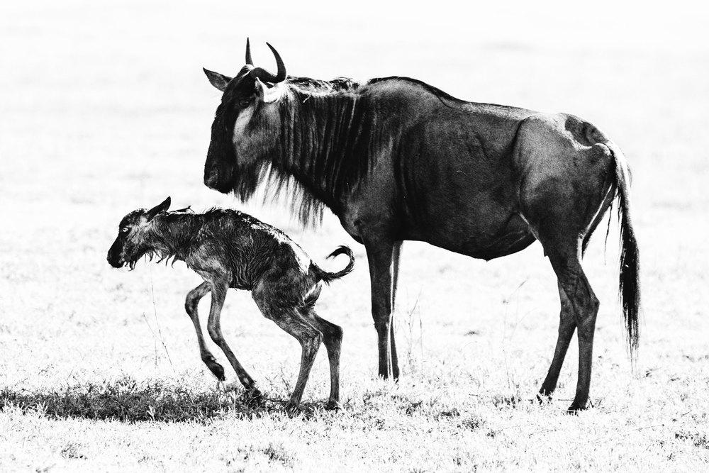 CallieGiovanna_Africa_Tanzania_NgoroNgoroCrater_20150101_08562.jpg