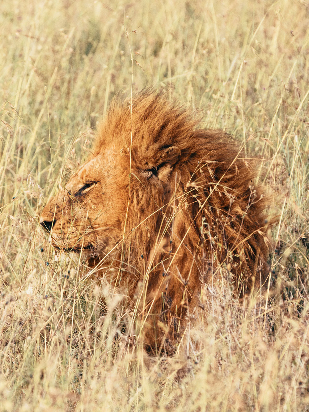 CallieGiovanna_Africa_Tanzania_Serengeti_20150101_07815.jpg