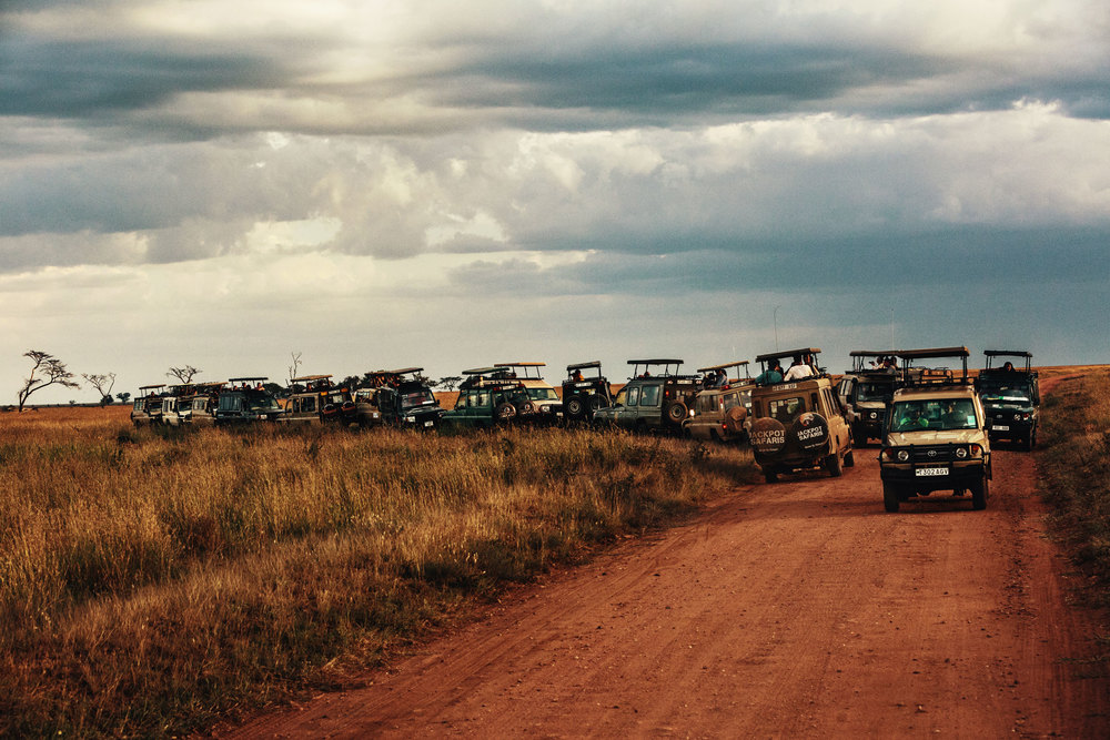 CallieGiovanna_Africa_Tanzania_Serengeti_20150101_07864.jpg