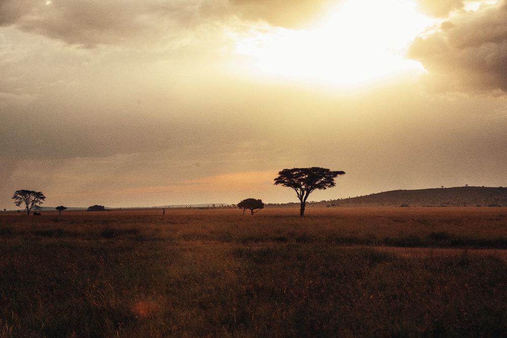 CallieGiovanna_Africa_Tanzania_Serengeti_20150101_07866.jpg