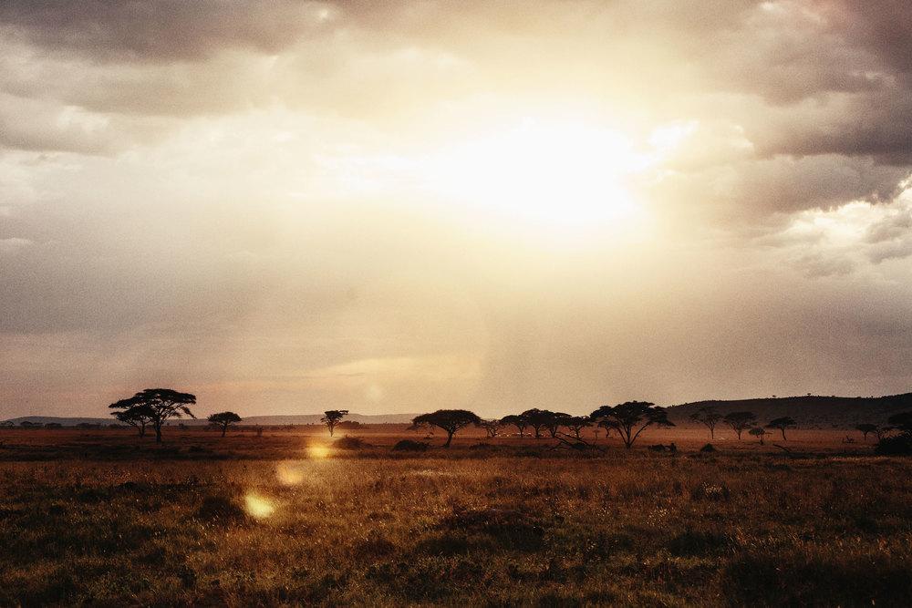 CallieGiovanna_Africa_Tanzania_Serengeti_20150101_07875.jpg
