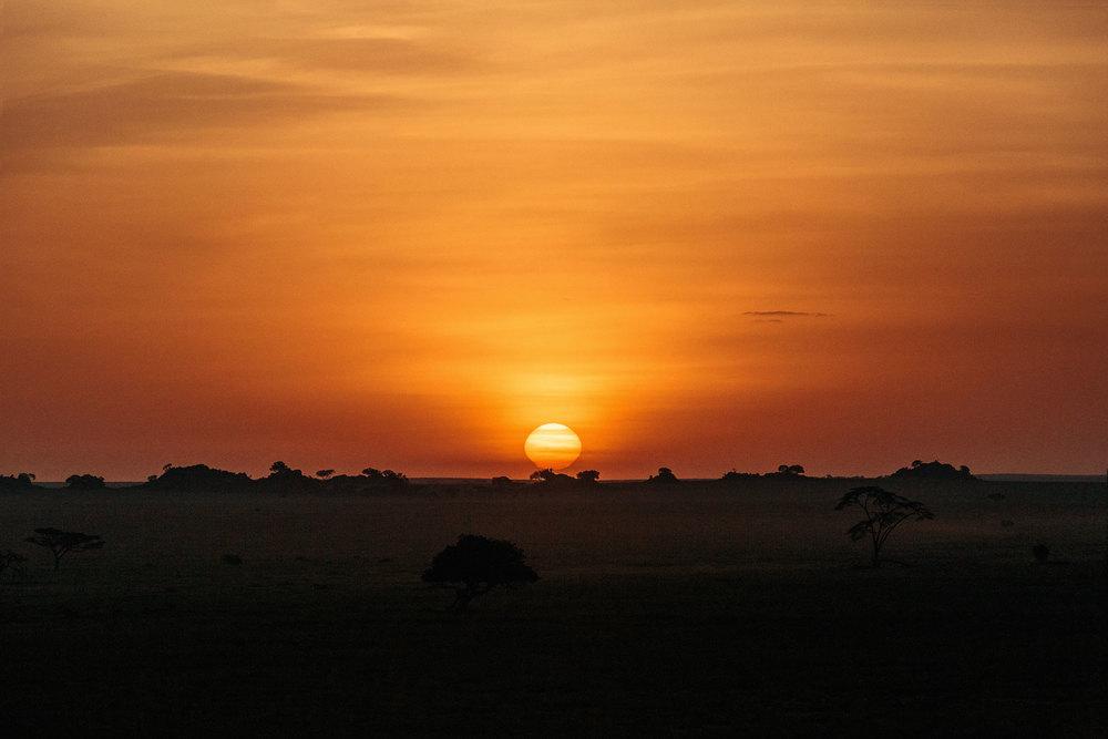 CallieGiovanna_Africa_Tanzania_Serengeti_20150101_07989.jpg