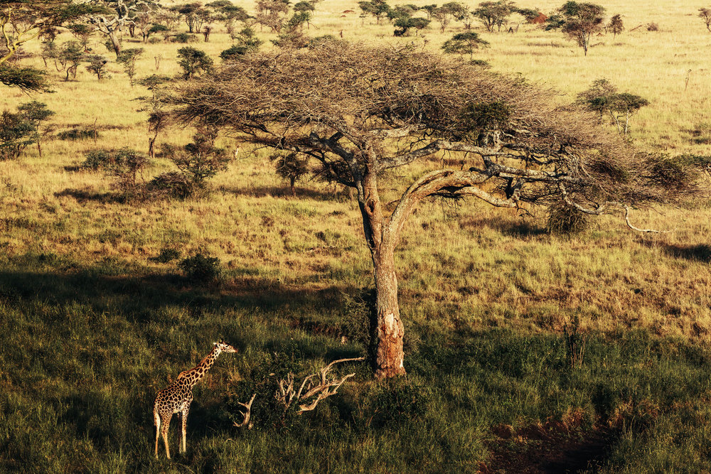 CallieGiovanna_Africa_Tanzania_Serengeti_20150101_08116.jpg
